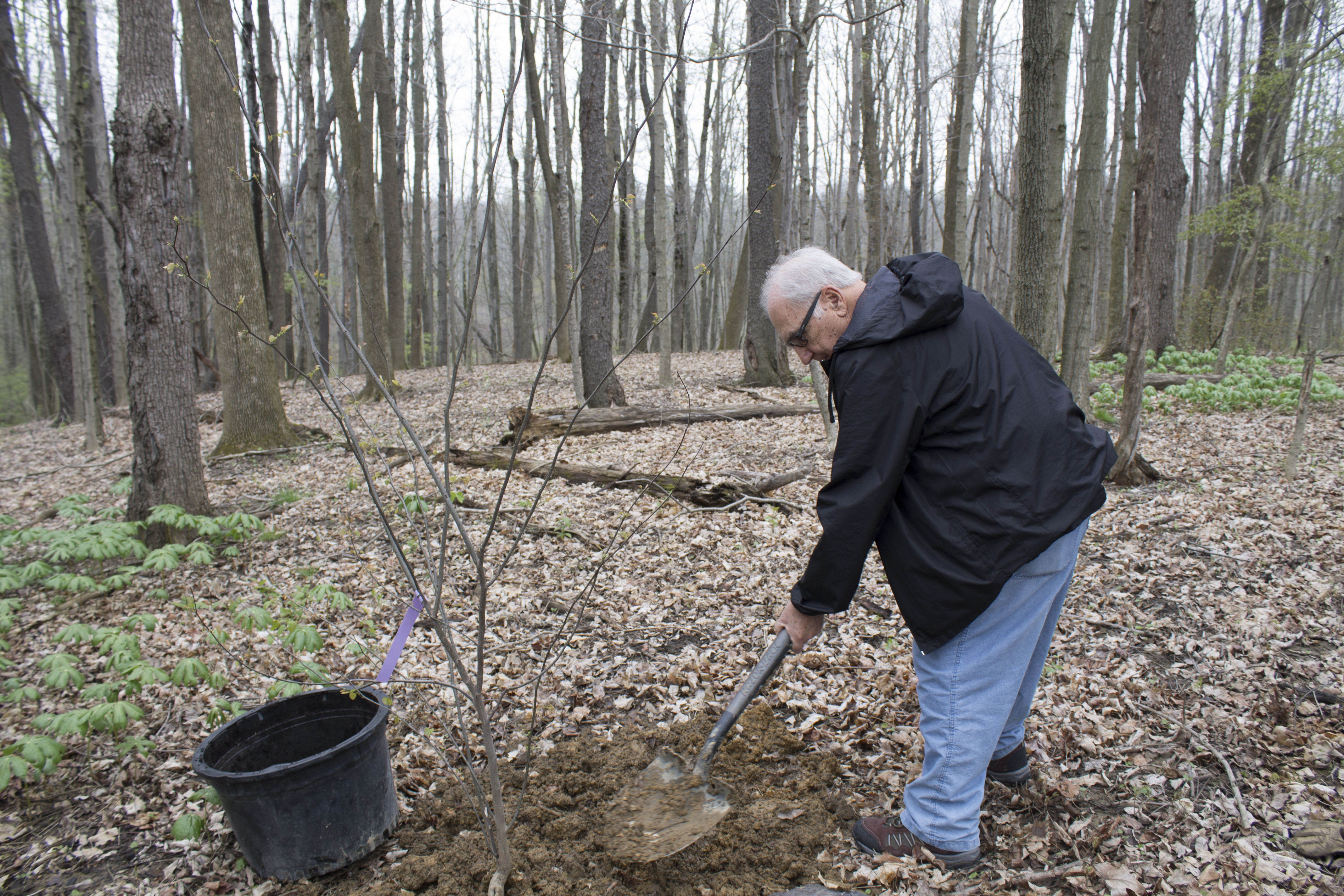 Volunteer Frank Shipley planting a tree